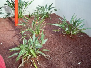 Rubber Wood Mulch